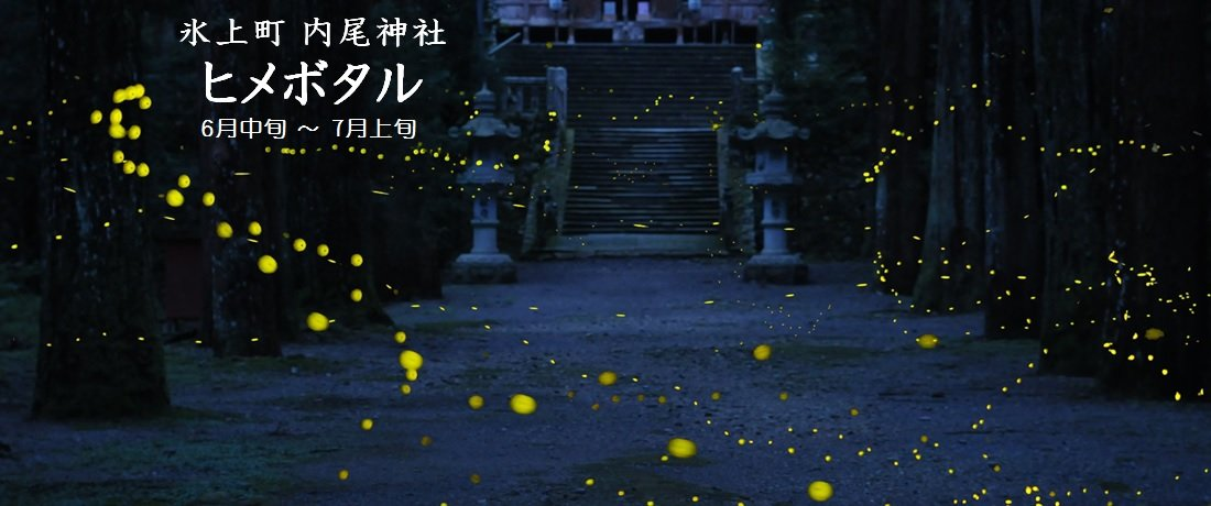内尾神社 ヒメボタル