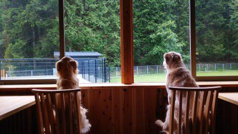 愛犬と泊まれる丹波の宿 華格子ーHANAKOSHiー