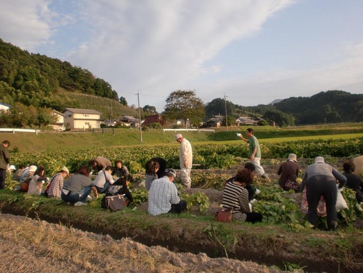 黒枝豆の収穫体験