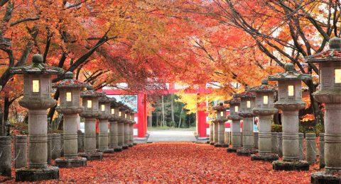 弘浪山 高山寺