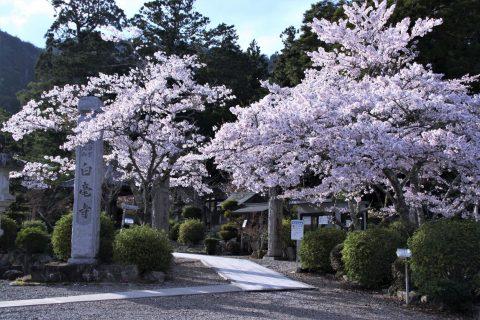 byakugouji3